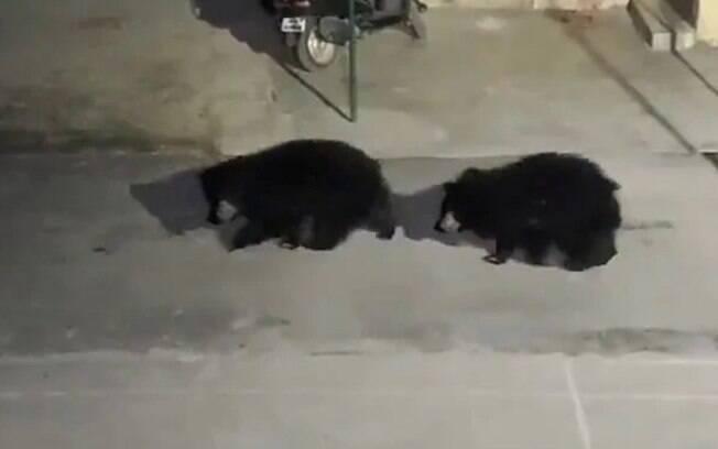 Um trio de ursos foi visto entrando em uma delegacia de polícia
