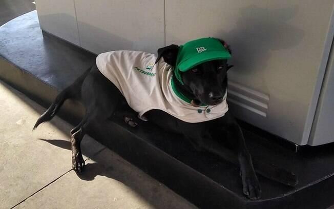 Cão se transforma em celebridade em Indaiatuba após ser adotado por frentistas