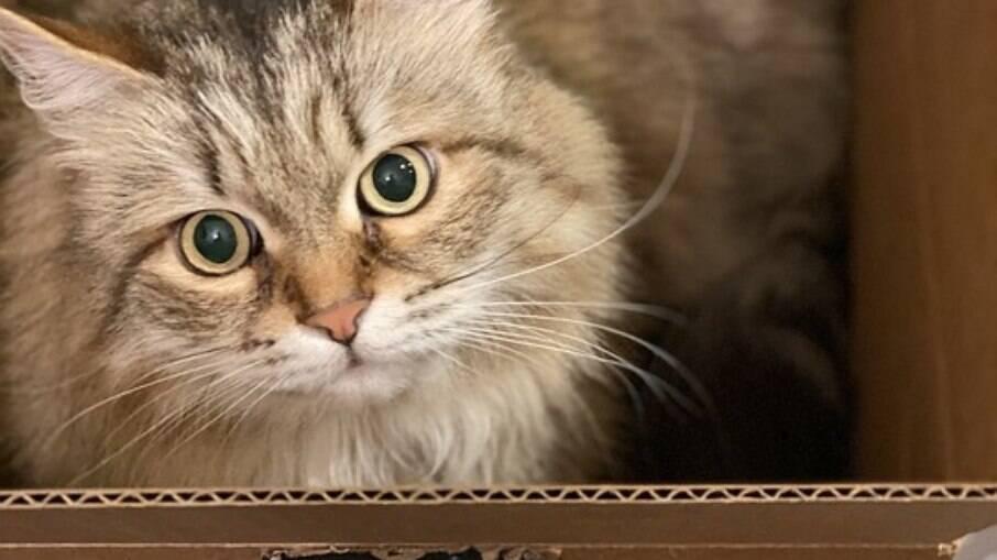 Gatos e seu amor por caixas