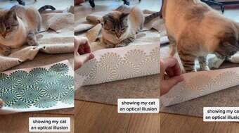 Reação de gato ao olhar para ilusão de ótica bomba nas redes