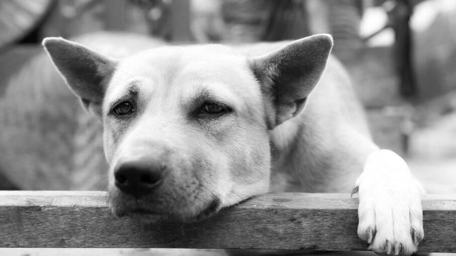 Maus tratos aos animais devem ser denunciado à Polícia, então as vitimas serão encaminhadas ao IMVL