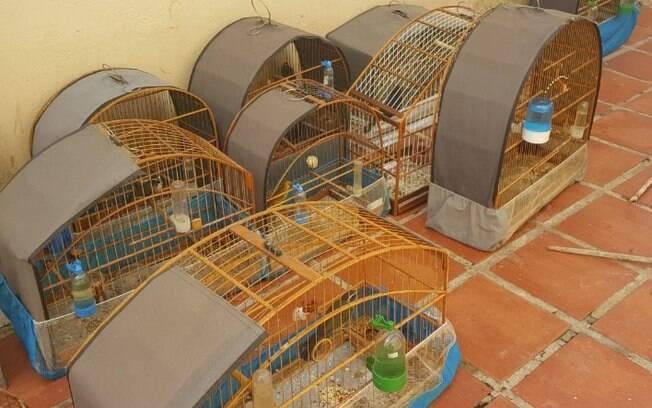 PM Ambiental apreende 27 pssaros silvestres em Campinas