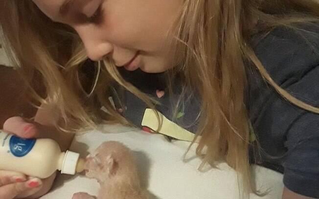 Greenlee morreu no final de semana após receber descarga elétrica fatal enquanto tentava resgatar filhotes de gato