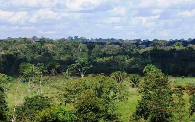 Floresta Nacional de Humaitá está na lista de concessões à iniciativa privada