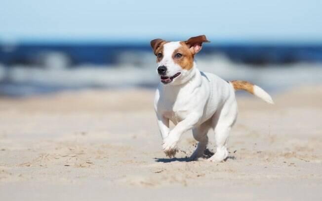 Levar o cão na praia pode ser divertido mas é preciso ficar atento aos cuidados