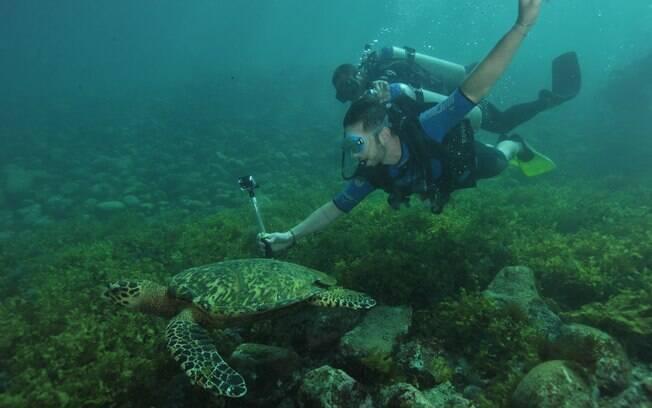 Mergulho é parte obrigatória da viagem para Noronha