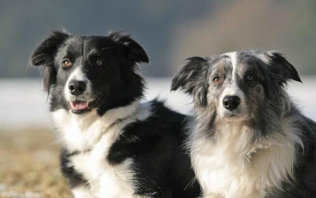 Tenha paciência na hora de educar seu cão. O tratamento da satiríase canina exige esforço por parte dos donos.