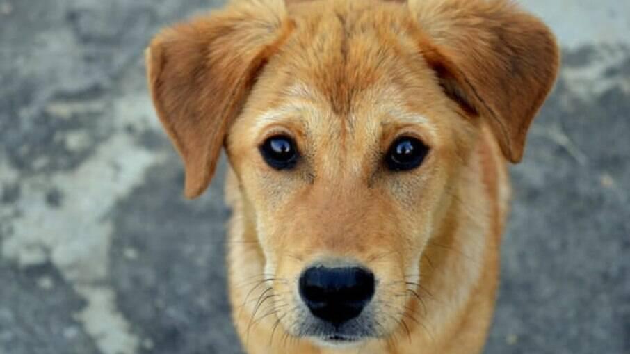 Cachorro sem raça definida