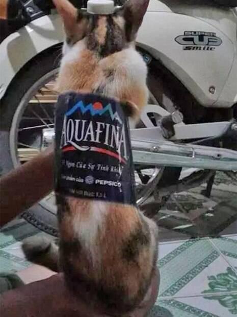 Nem os gatos ficaram de fora e também foram fantasiados de refrigerante