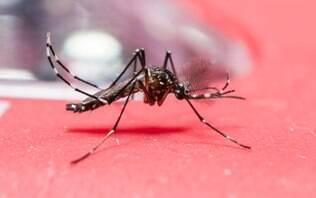 Casos de zika na Colômbia passam de 22,6 mil; país é o segundo mais infectado - iGVigilante - iG