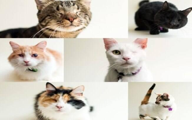Gatos cegos são fotografados pra um tocante ensaio sobre adoção