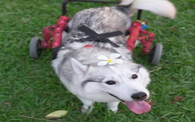 Maya e sua cadeira de rodas