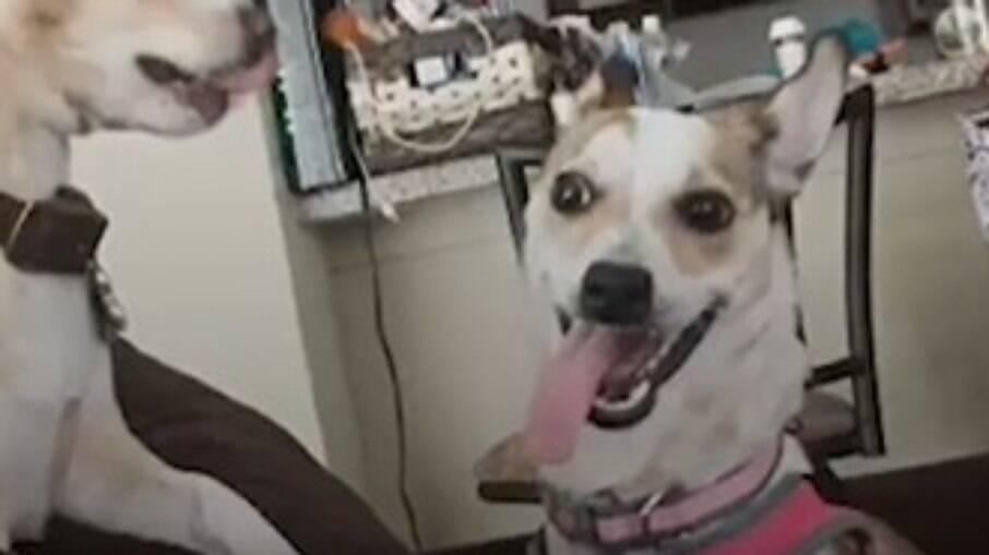 Callie, cachorro resgatado de lixão