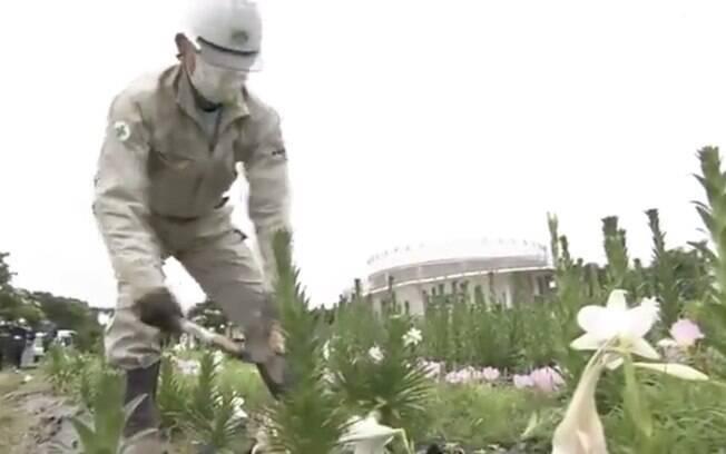 Trabalhadores cortam lírios no Parque Esportivo de Okinawa