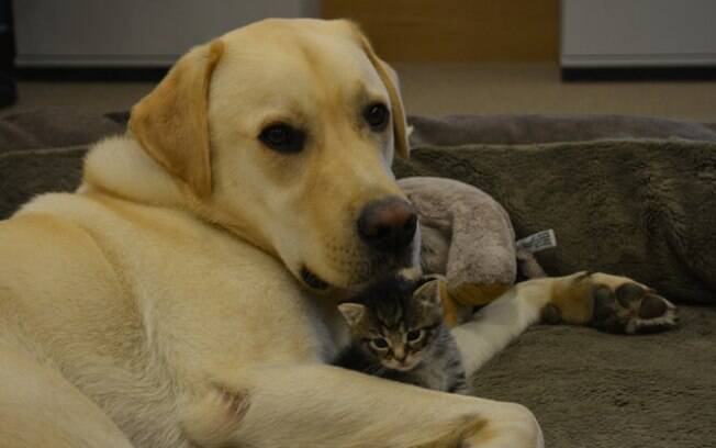 Cachorro conforta gatinha que perdeu sua família