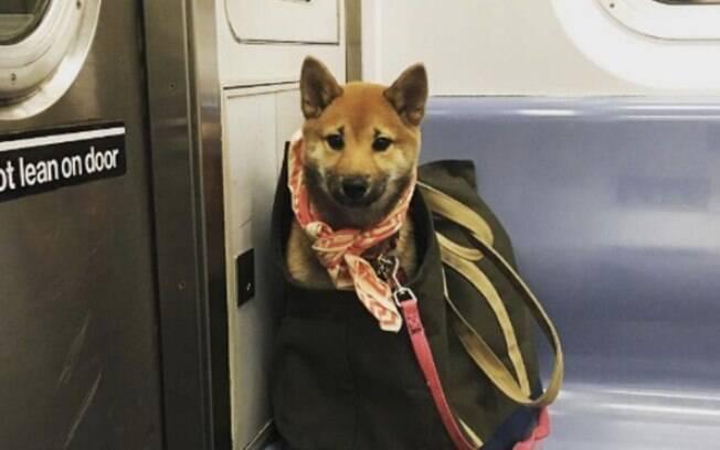 As pessoas deram um jeito de entrar com seus cachorros no metrô de Nova York