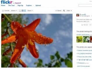 O Flickr atingiu 6 bilhões de fotos