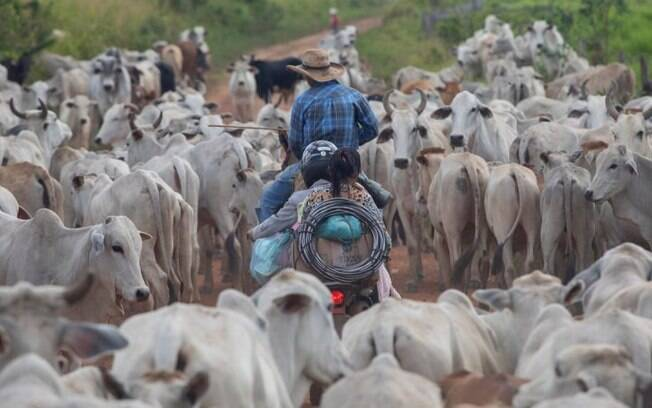 Relatório mostra 'lavagem' de bovinos entre fazendas irregulares, dentro de áreas protegidas, e estabelecimentos dentro da lei; JBS nega