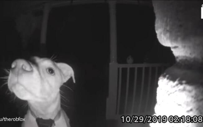 Labrador tocando campainha