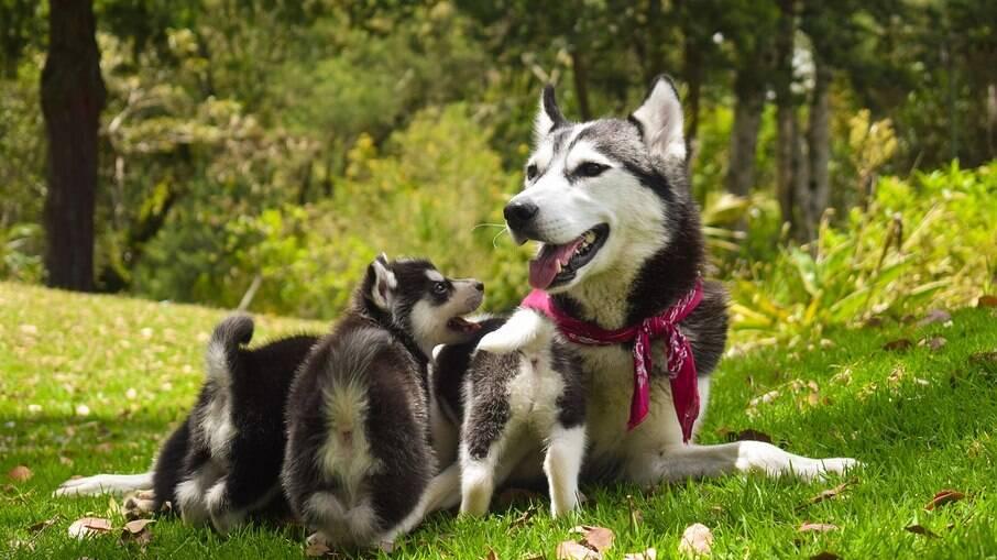 É com a cadela mãe que os filhotes aprendem no inicio da vida