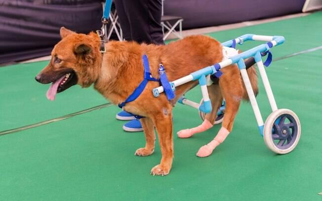 É possível adestrar animais deficientes e torná-los praticamente independentes