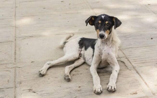 Além do tratamento médico e administração de remédios, a mudança na alimentação é um fator importante na recuperação do cachorro com anemia