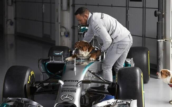 Hamilton e a cachorra na Formula 1