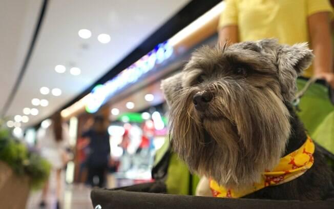 Antes de levar o animal de estimação para o shopping é preciso tomar alguns cuidados