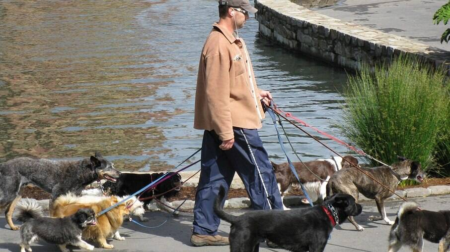 O cinto de passeio pode ser usado também por quem anda com mais de um cachorro ao mesmo tempo