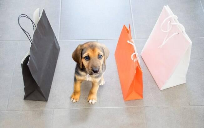 Levar o cachorro no shopping é cada vez mais comum