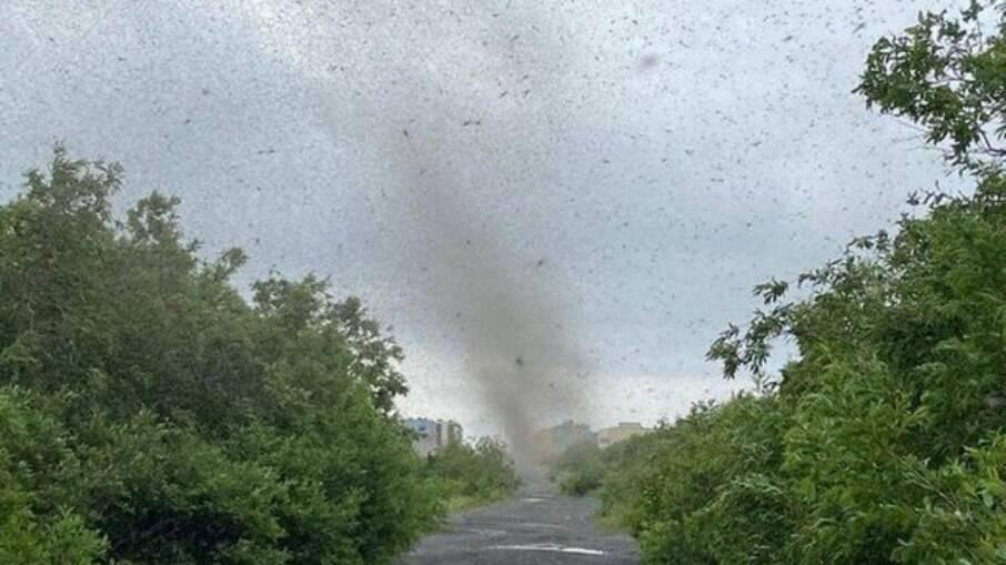 'Tornado de mosquitos' na Rússia