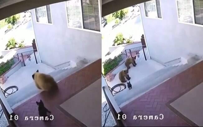 Cachorro super corajoso espanta ursos do quintal