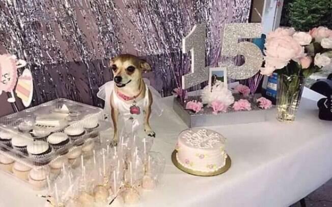 A chihuahua teve direito a bolo canino e convidados peludos na sua festa