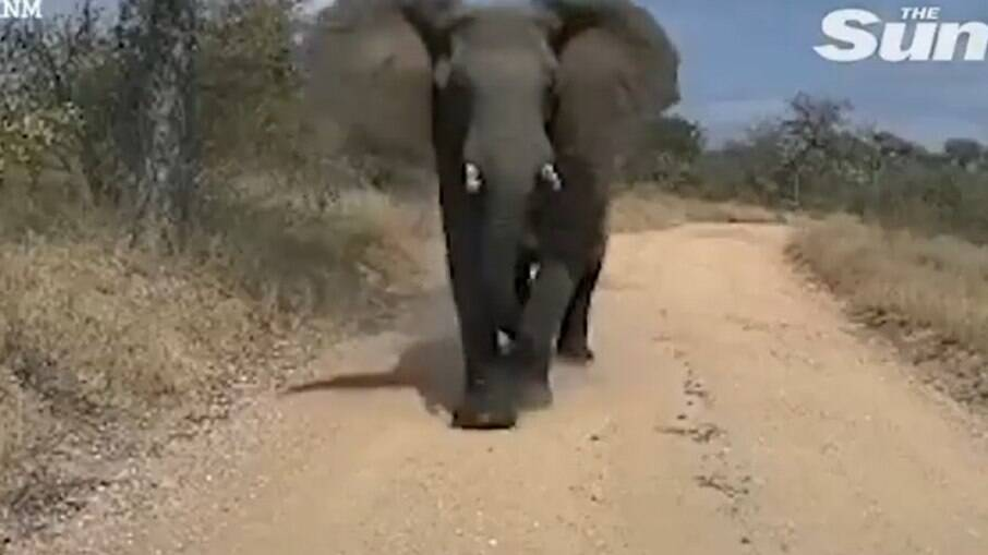 Elefante esmaga caminhão na África do Sul