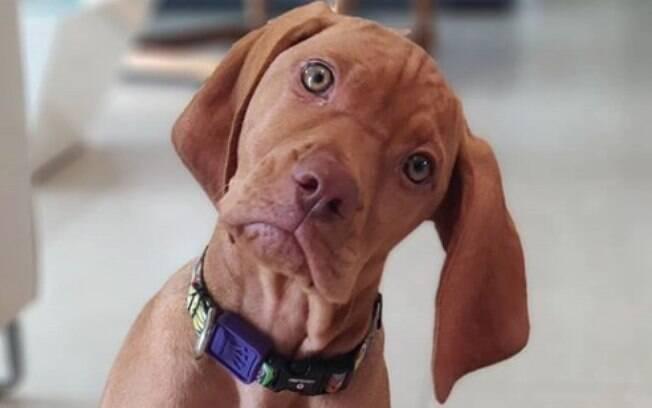 Os donos de Joy, uma filhote de quase 4 meses, têm o problema do cachorro mordendo muito