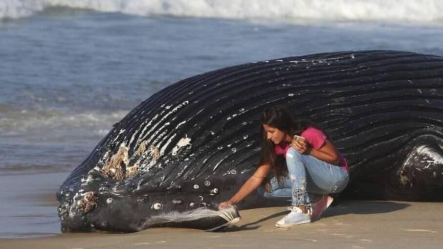 Baleia encontrada morta na praia de São Conrado