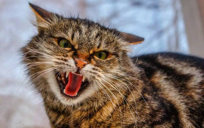 Em geral os gatos não gostam de carinho na barriga. Basta o dono chegar perto que o animal fica meio agressivo, podendo até morder e arranhar