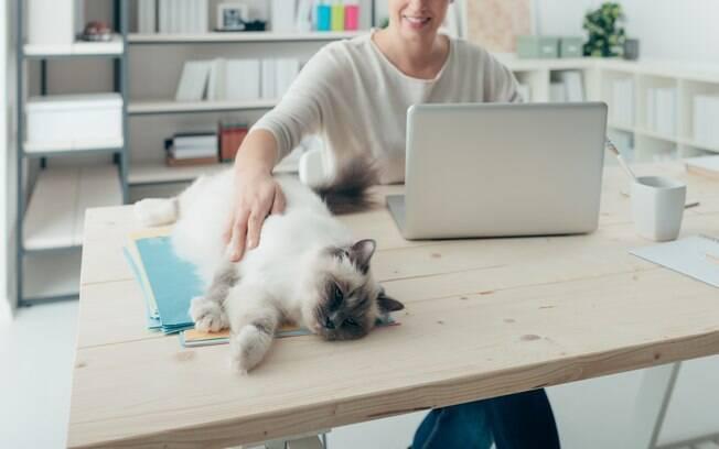 A Go Shop, por exemplo, é uma empresa cat friendly