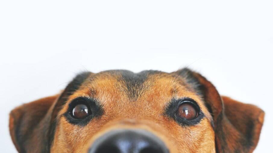 A cegueira em cães e gatos pode ser causada por doenças como a diabetes e por maus tratos e acidentes