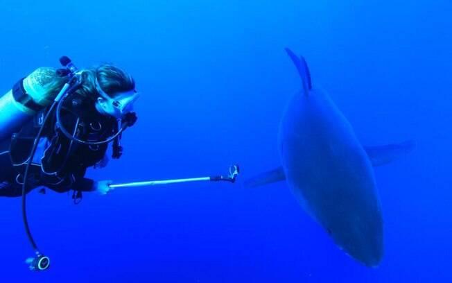 Karina mergulha com tubarões na Ilha de Guadalupe, próximo da costa mexicana