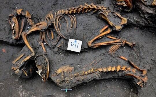 Arqueólogos descobrem cemitério de cães astecas sob prédio no México - Ciência - iG
