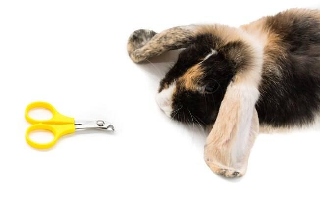 As unhas do coelho também precisam ser aparadas de vez em quando