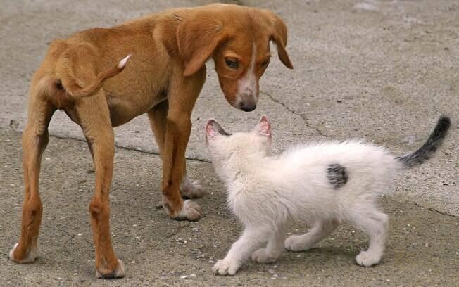 8 possíveis causas e como ajudar um gato ou cachorro magro demais