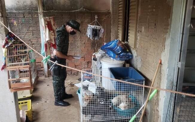 Homem é multado em R$ 144 mil por maus tratos a cachorros em Sumaré