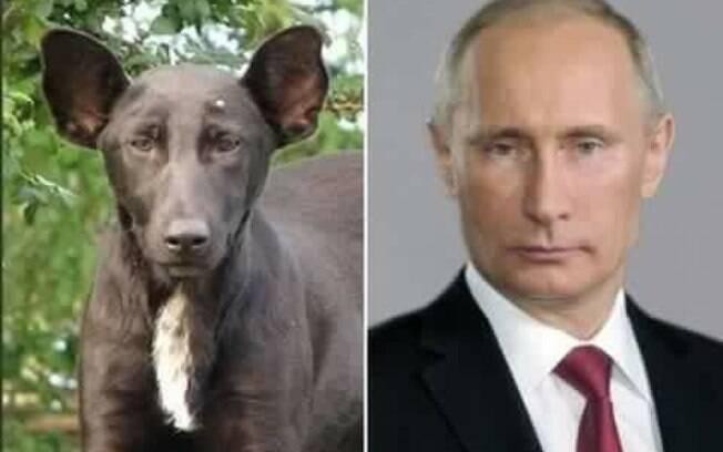E não é que até o líder russo, Vladimir Putin, encontrou sua alma gêmea canina?