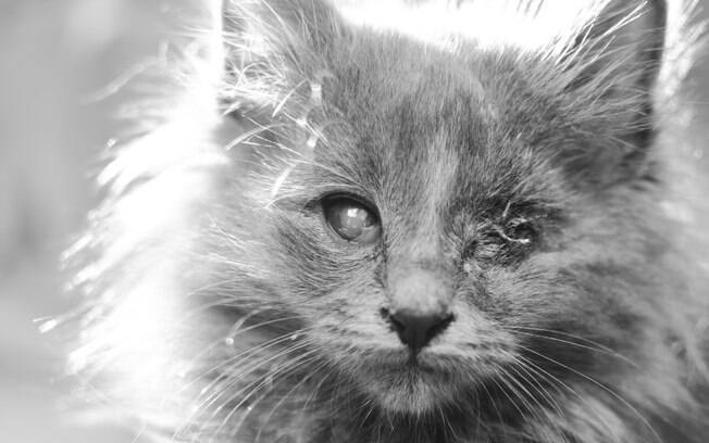 Gato cego precisa de várias adaptações em casa e de cuidados específicos