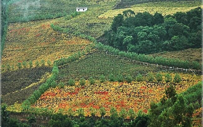 O Vale dos Vinhedos, em Bento Gonçalves, é uma iniciativa que reúne um roteiro com a opção de conhecer mais de 30 vinícolas da região. Foto: Fabio Mazzoti