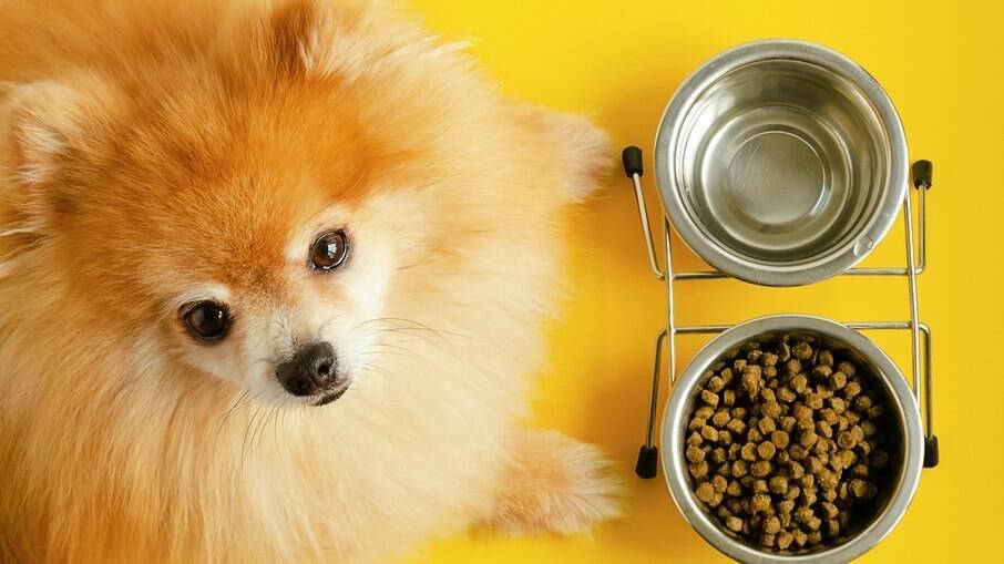 Uma boa alimentação é fundamental para a saúde do pet