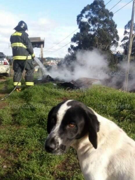 O cachorro de rua ficou parado olhando os bombeiros apagarem o fogo de sua casinha