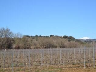 Parreiras. São mais de quinhentos viticultores e quinze tipos de uvas